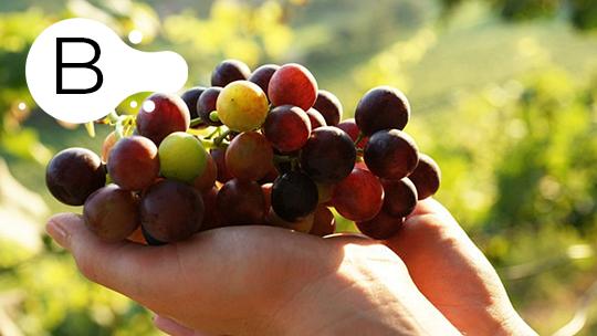 Tutti Frutti Vino B  GOURMET